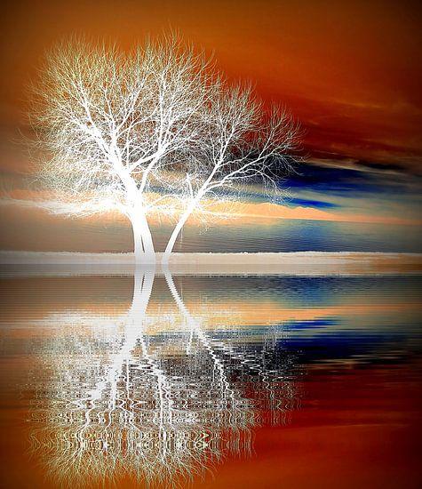 Winter boom van Renate Knapp