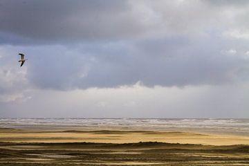 Meeuw vliegend over strand met stuifzand van Menno van Duijn