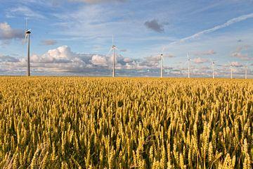 Les champs de céréales sur Frenk Volt
