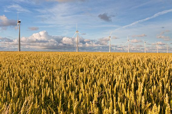 Graanvelden in de Eemspolder