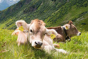 Junger Pinky, in Tirol von Aukelien Minnema
