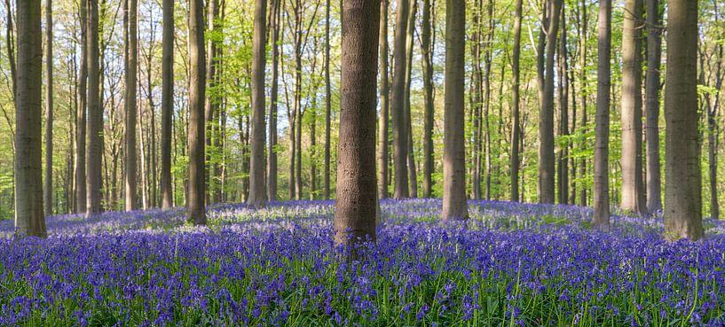 Blue bells van Ben van Sambeek