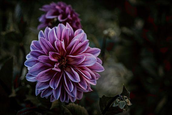 Fleur en violet