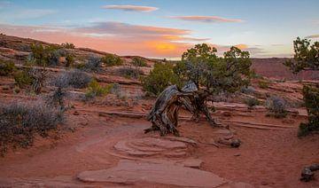 Avondlicht in Arches Nationaal Park, Utah van Rietje Bulthuis