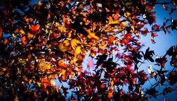 Dansende herfstbladeren in de wind van