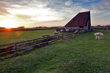 Schapen boet Den Hoorn Texel van