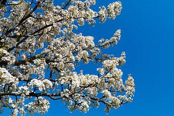 Voorjaar is in de lucht van Bob de Bruin