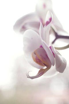 Orchidee van Sandor Ploegman-Stam
