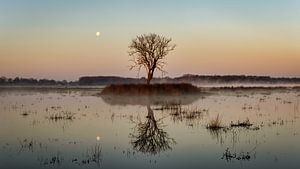 Lune au-dessus du Kloosterveld