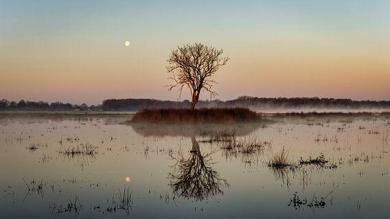 Maan boven Kloosterveld