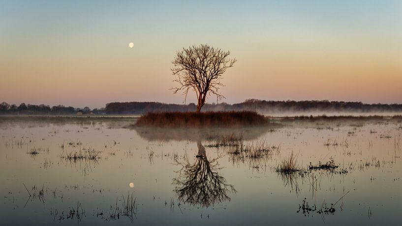 Maan boven Kloosterveld van Anneke Hooijer
