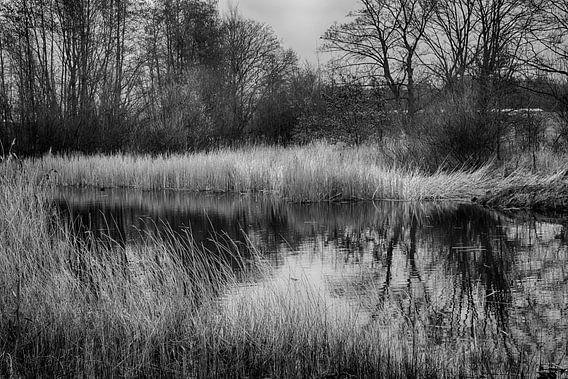 Ven in het Staelduinse Bos (zwart/wit)