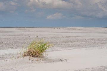 Eenzaam op het strand von