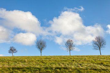 Bäume mit Sommerwolken bei Engenhahn von Christian Müringer
