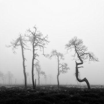 Die besonderen verbrannten Bäume bei Noir Flohay im Hohen Venn in den belgischen Ardennen. von Jos Pannekoek