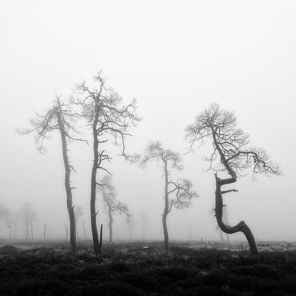De mooie verbrande bomen van Noir Flohay op de Hoge Venen in de Belgische Ardennen. van Jos Pannekoek