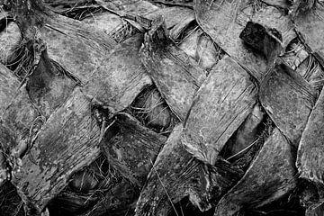 gekreuzte Rinde in schwarz/weiß von Bert Bouwmeester