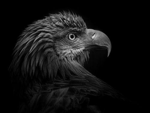 European eagle von Ruud Peters