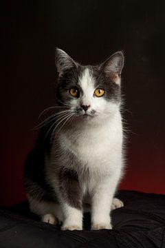grijswitte kat met gele ogen van Bianca Muntinga