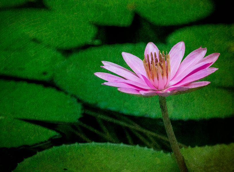 Roze schoonheid van Greetje van Son