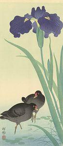 Waterhoentjes en iris., Ohara Koson