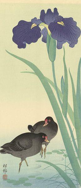 Waterhoentjes en iris., Ohara Koson van 1000 Schilderijen