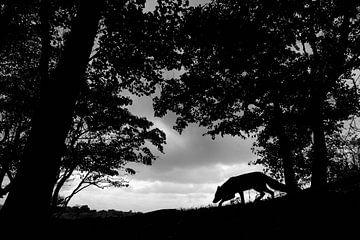 Se faufiler dans la forêt sur Pim Leijen