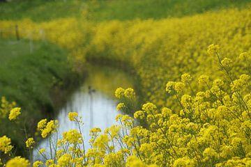 Gelbe Blume Macht von Esther Leijten-Kupers