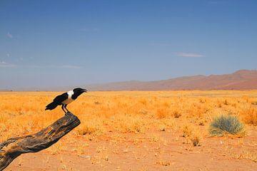 Schwarze und weiße Krähe in der Wüste von Bobsphotography