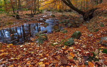 Herbst in den belgischen Ardennen von Mike Broers