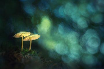 Dromerige paddenstoeltjes van Jan van der Linden