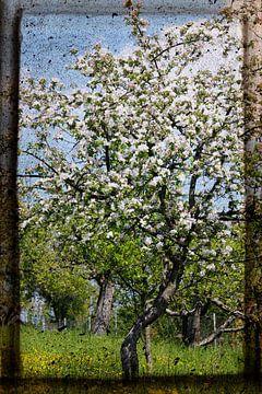 Dromen van de lente van Anette Jäger