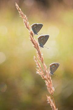 Three is a charme von Joyce Beukenex