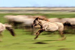 Running Horses van Rene Kooijman