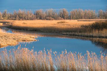 Ein schöner Wintertag im Polder von Koen Hoekemeijer