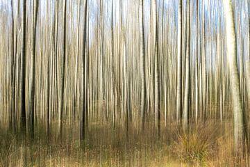 Birkenwald auf der Veluwe. von Albert Beukhof