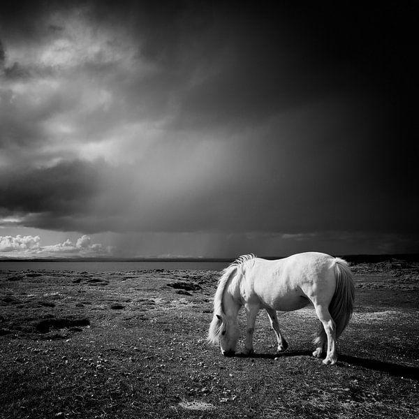 Icelandic Horse van Arnold van Wijk
