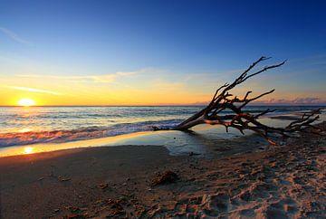 Treibholz am Strand von Frank Herrmann