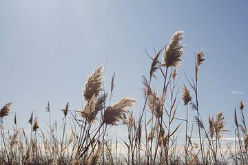 duinen van