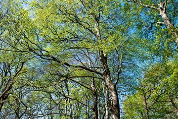 Waldspaziergang von Hanneke Luit