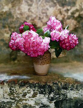 Hortensia op steen van . Groningenart