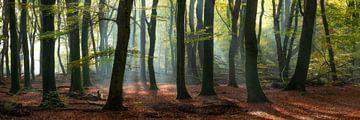 Magie in het Speulderbos - Panorama #2 von Edwin Mooijaart