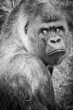 Bokito, the escaping gorilla van Fons Simons
