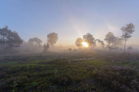 Mistig landschap in Sallandse Heuvelrug van Remco Van Daalen