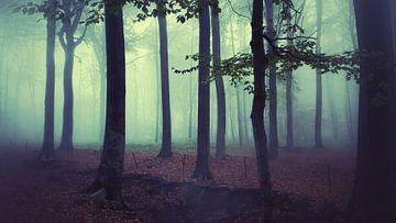 Het mysterieuze bos van Dick Carlier