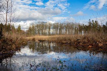 Reflection I van Johan Mooibroek
