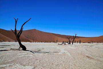 Sossusvlei (Deathvlei) Namibia (Namib-Naukluft-Park) von Merijn Loch