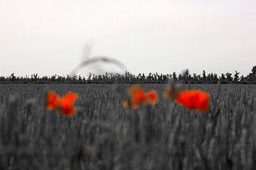 Vage klaprozen von Arno Photo