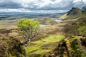 The Quiraing Tree