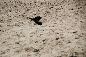 vogel op het strand von Danielle Vd wegen